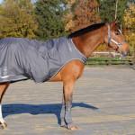 rug freedom - horse