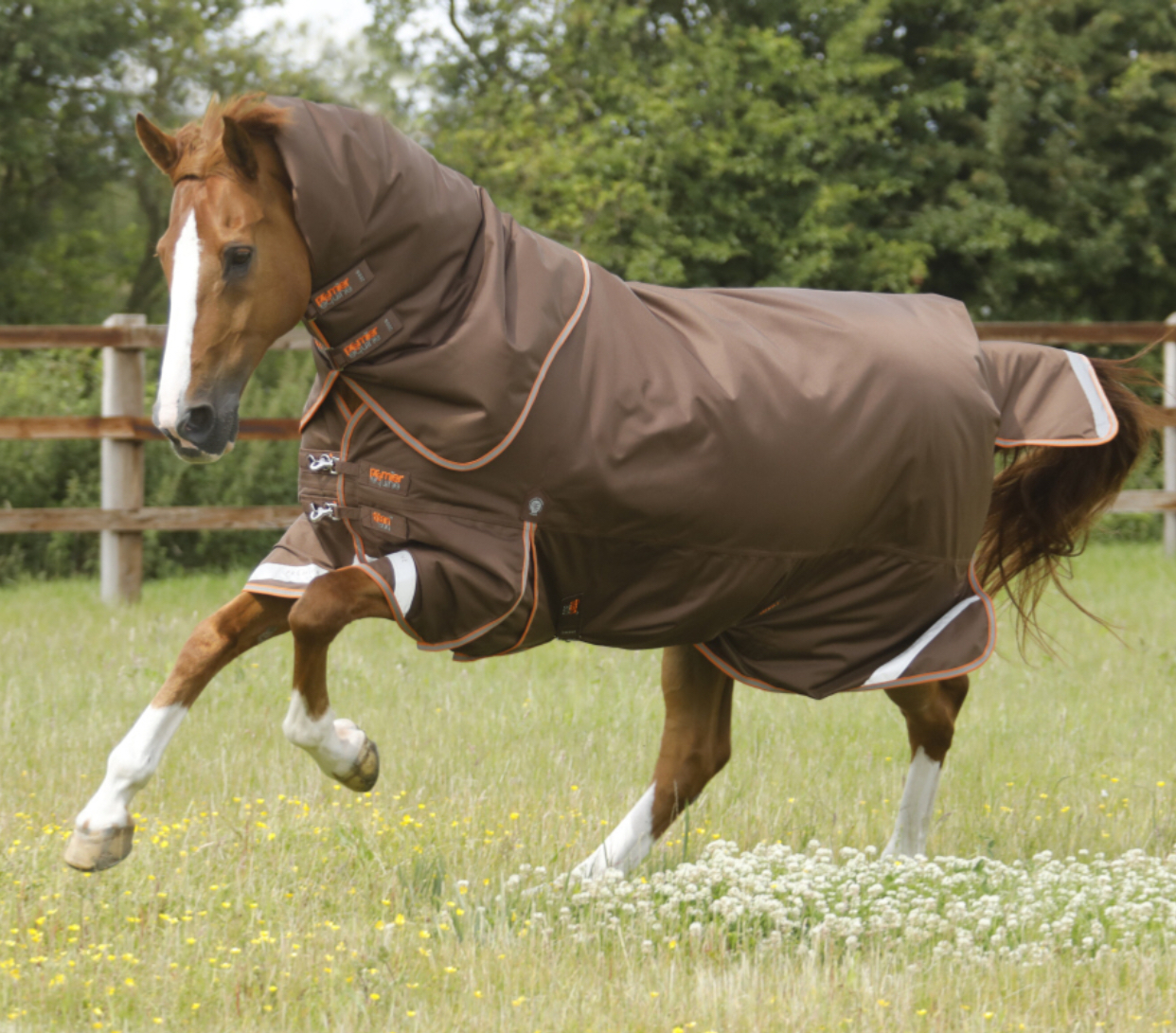 Premier Equine